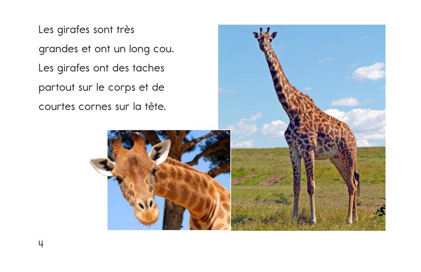 Book Preview For Animals, Animals Page 4