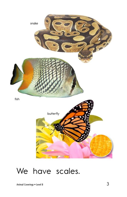 Book Preview For Animal Coverings Page 3