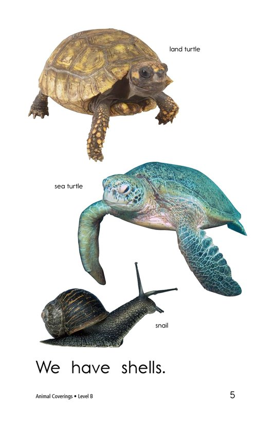 Book Preview For Animal Coverings Page 5