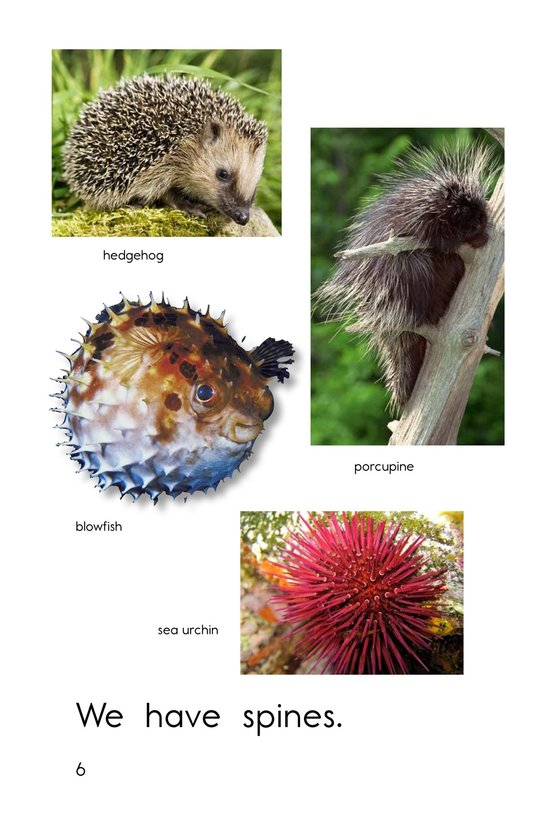 Book Preview For Animal Coverings Page 6