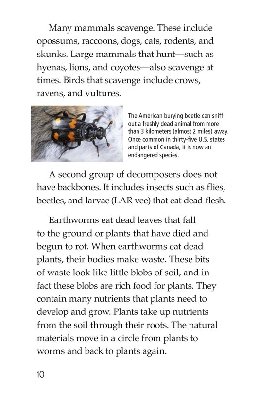 Book Preview For Nature Reuses and Recycles Page 10