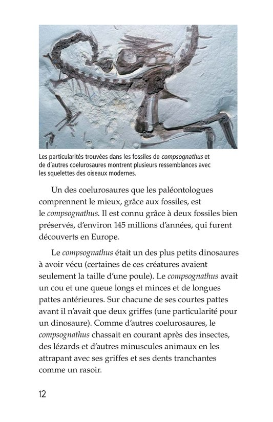 Book Preview For Early Birds: Fossils and Feathers Page 12