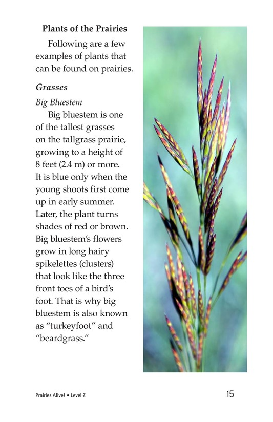 Book Preview For Prairies Alive! Page 15
