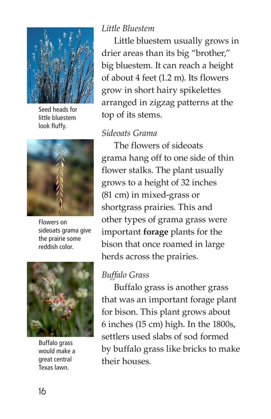 Book Preview For Prairies Alive! Page 16