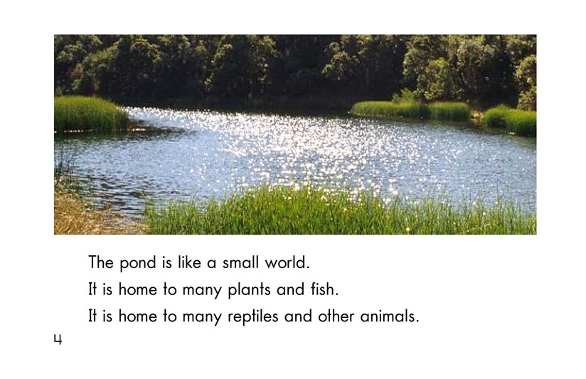 Book Preview For Life at the Pond Page 4