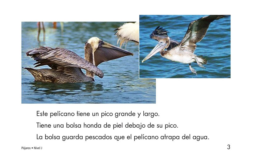 Book Preview For Birds Page 3