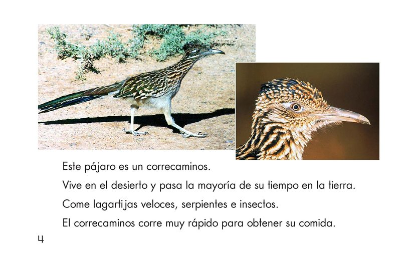 Book Preview For Birds Page 4