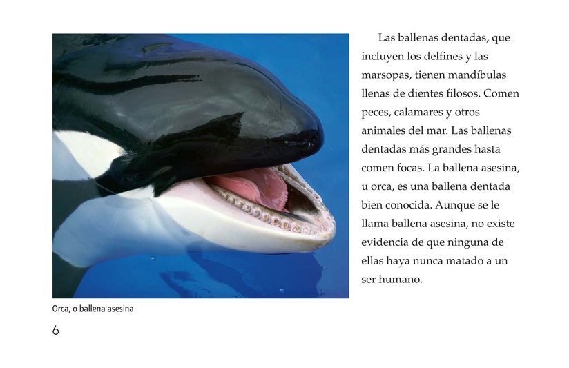 Book Preview For Whales Page 6