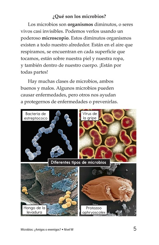 Book Preview For Microbes: Friend or Foe? Page 5
