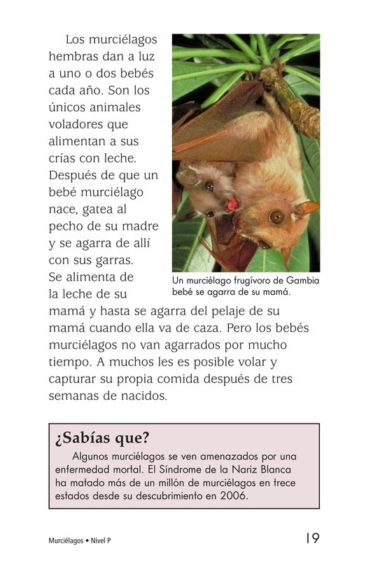 Book Preview For Bats Page 19