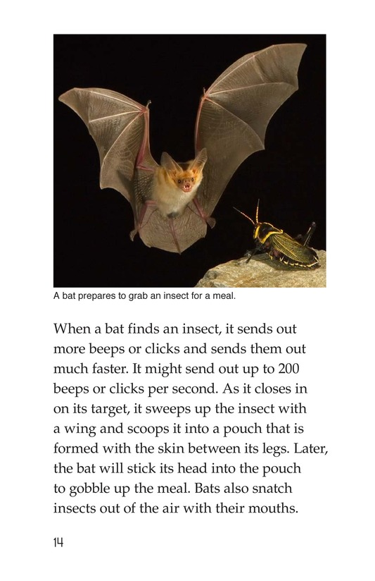 Book Preview For Bats Page 14