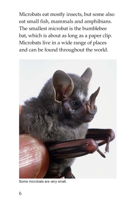 Book Preview For Bats Page 6