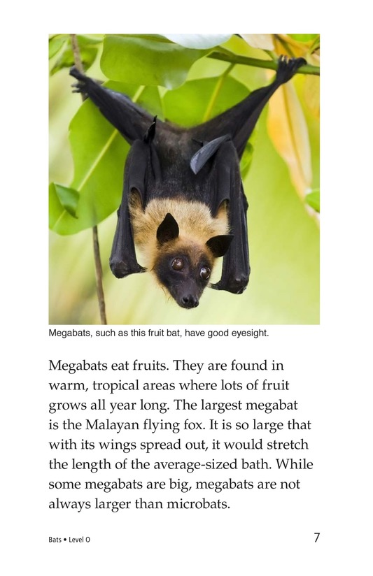 Book Preview For Bats Page 7