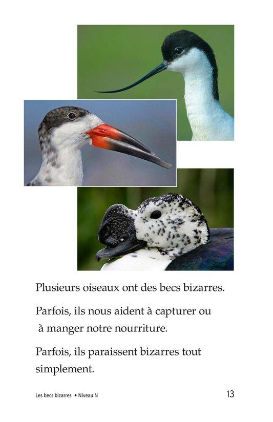 Book Preview For Weird Bird Beaks Page 13