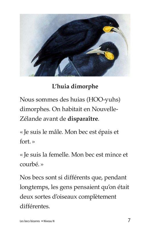 Book Preview For Weird Bird Beaks Page 7