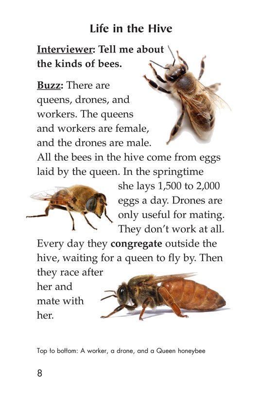 Book Preview For The Beekeeper Page 8