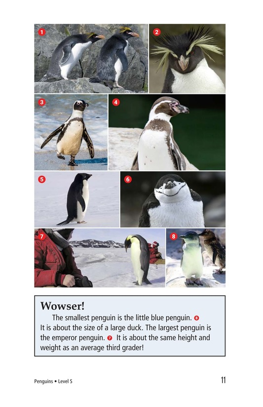 Book Preview For Penguins Page 11