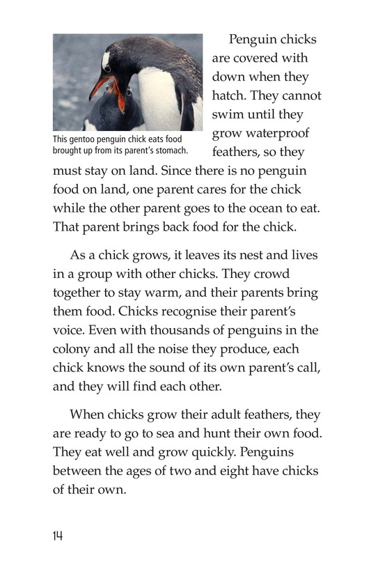 Book Preview For Penguins Page 14