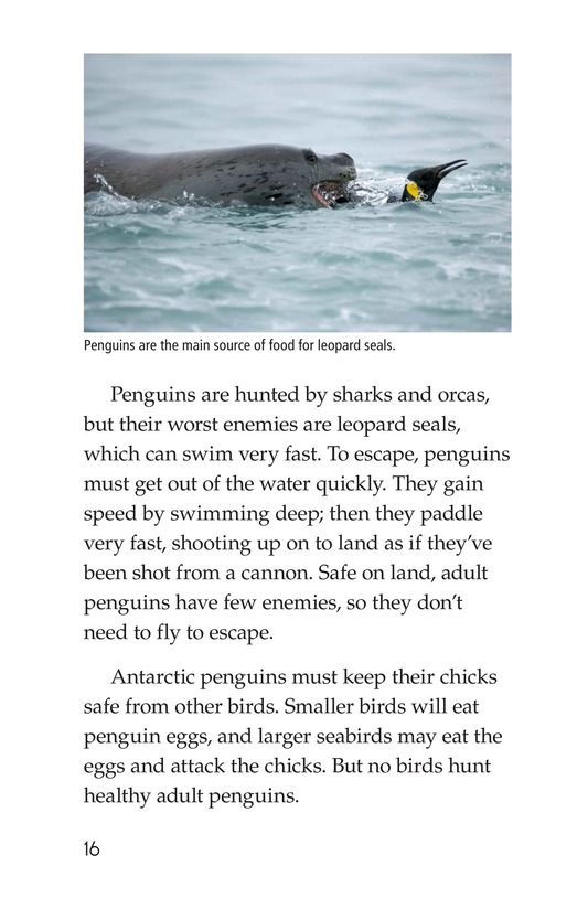 Book Preview For Penguins Page 16