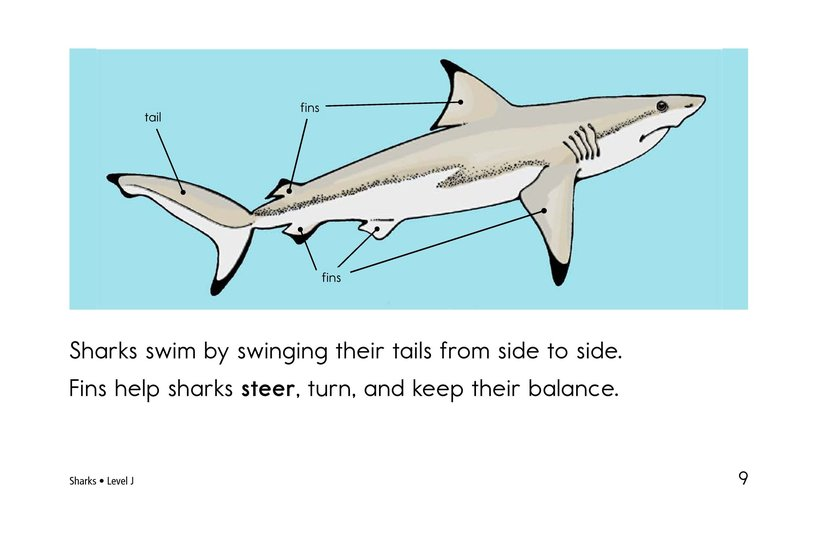 Book Preview For Sharks Page 9
