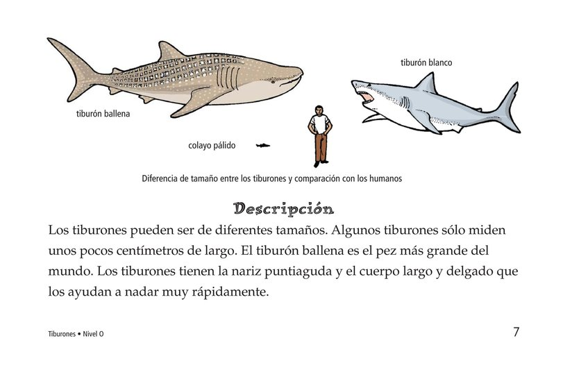 Book Preview For Sharks Page 7