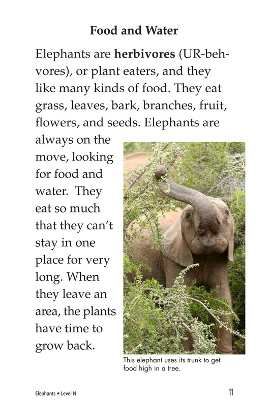 Book Preview For Elephants Page 11