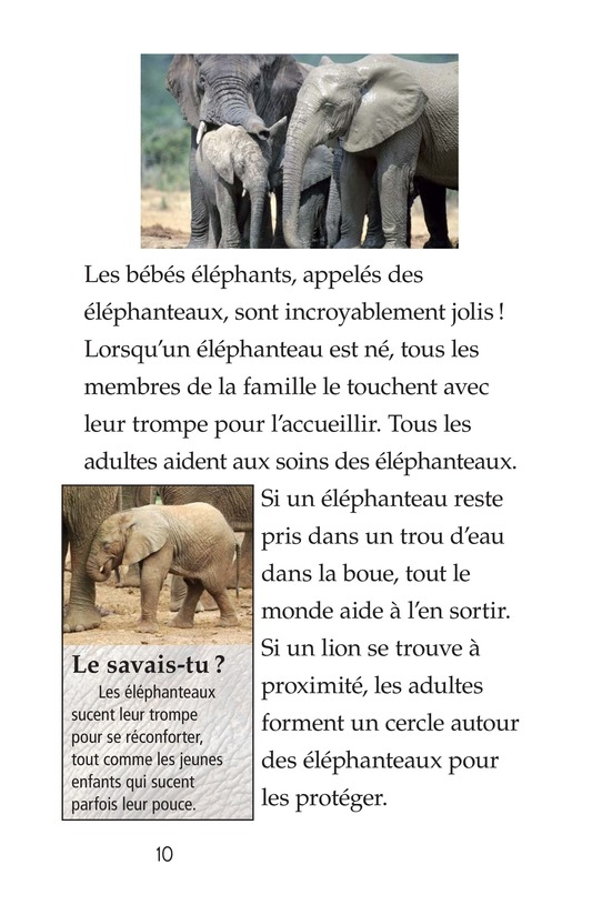 Book Preview For Elephants Page 10