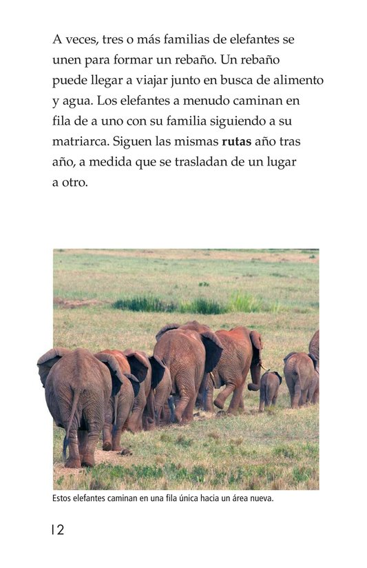 Book Preview For Elephants Page 12