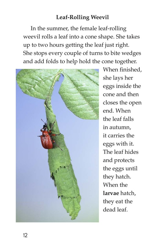 Book Preview For Wonders of Nature Page 12