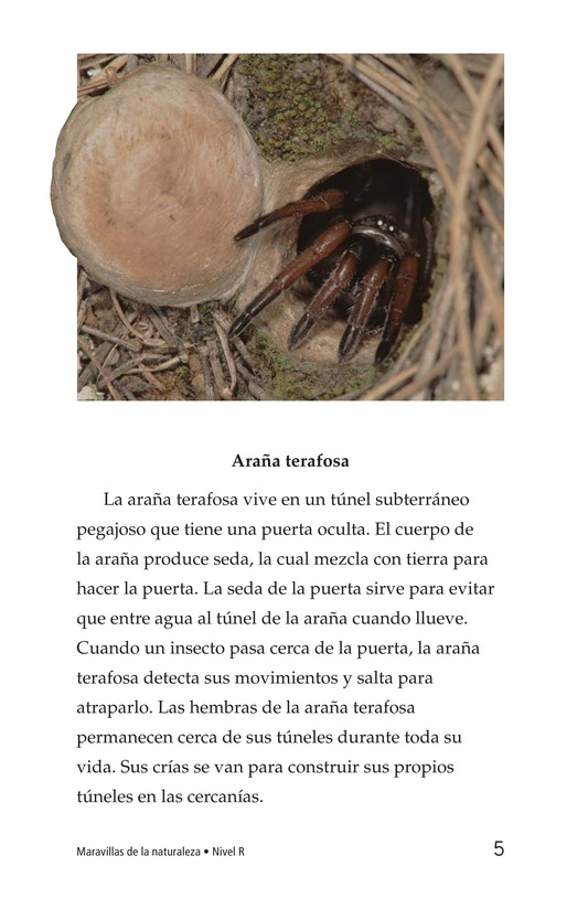 Book Preview For Wonders of Nature Page 5