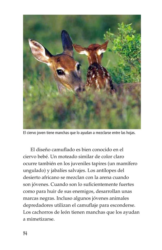 Book Preview For Camouflage Page 14