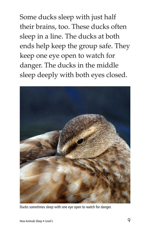 Book Preview For How Animals Sleep Page 9