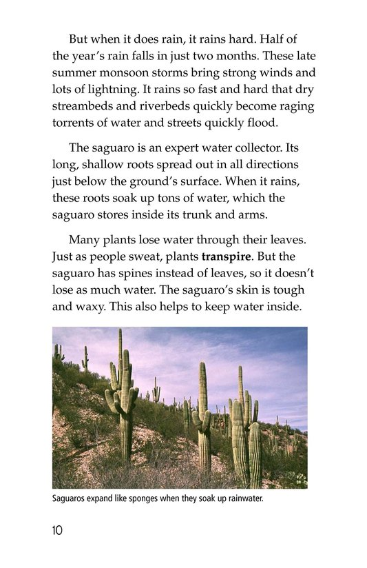 Book Preview For The Mighty Saguaro Cactus Page 10