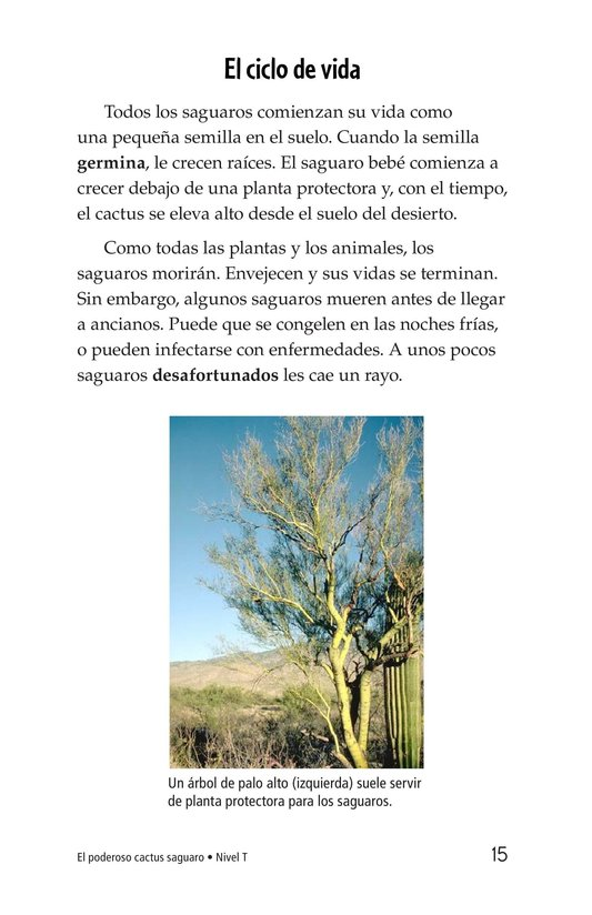 Book Preview For The Mighty Saguaro Cactus Page 15