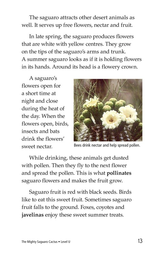 Book Preview For The Mighty Saguaro Cactus Page 13