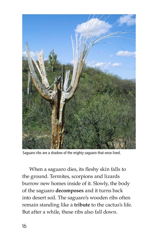 Book Preview For The Mighty Saguaro Cactus Page 16