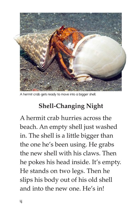 Book Preview For Hermit Crabs Page 4