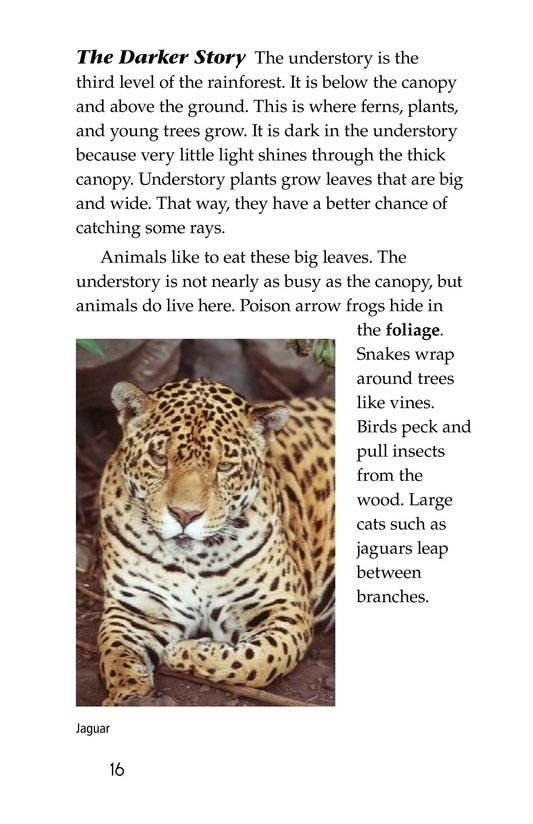 Book Preview For The Amazing Amazon Page 16
