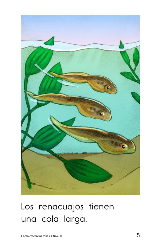 Book Preview For How Frogs Grow Page 5