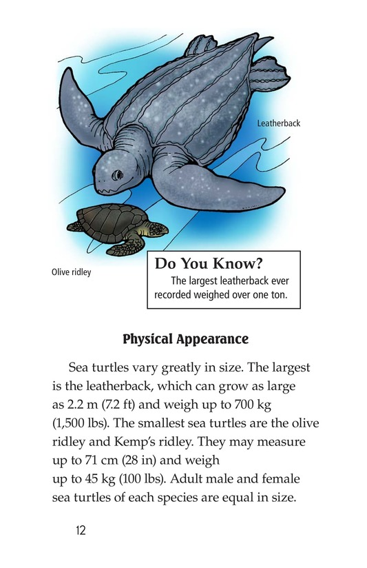 Book Preview For Sea Turtles Page 12