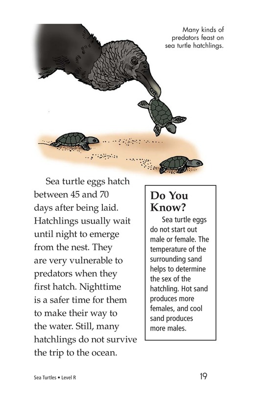 Book Preview For Sea Turtles Page 19