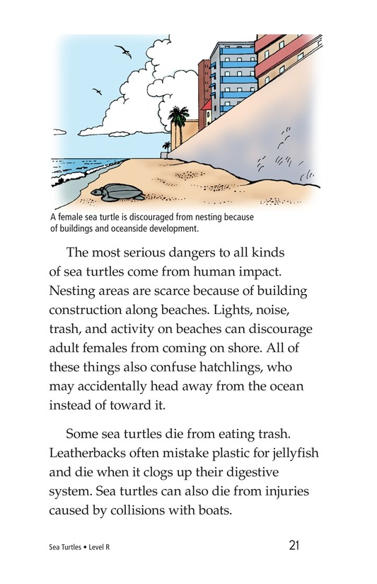 Book Preview For Sea Turtles Page 21
