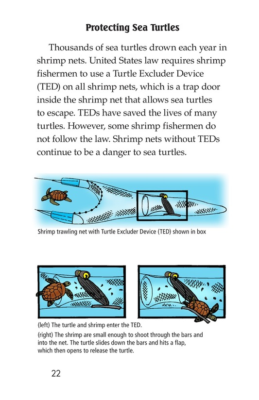 Book Preview For Sea Turtles Page 22