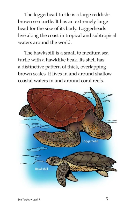 Book Preview For Sea Turtles Page 9