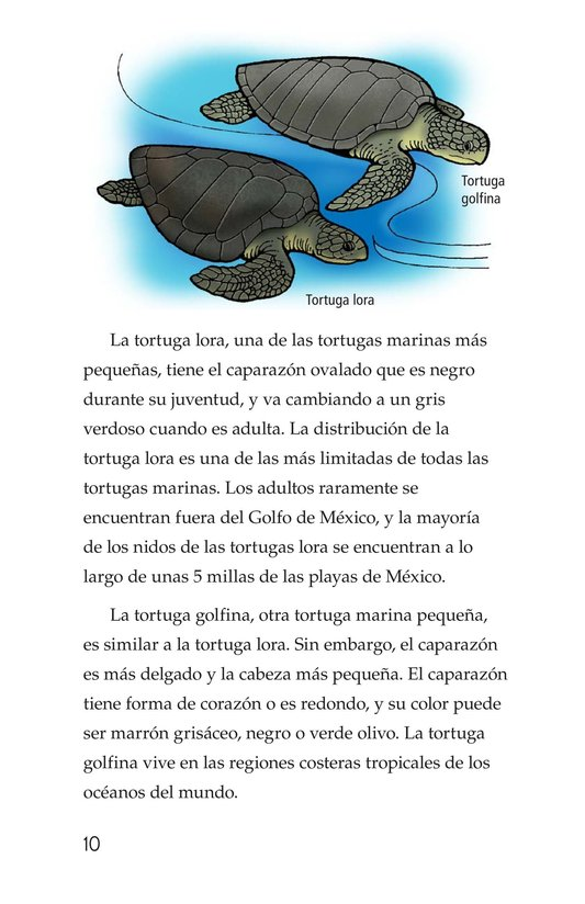 Book Preview For Sea Turtles Page 10