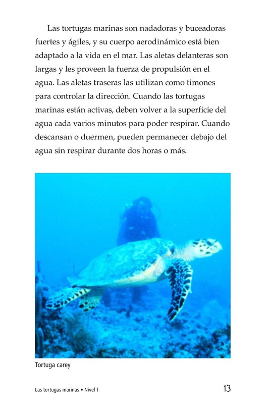 Book Preview For Sea Turtles Page 13