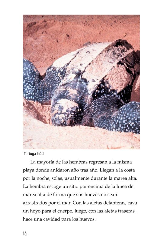 Book Preview For Sea Turtles Page 16