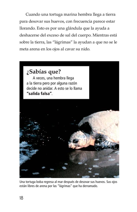 Book Preview For Sea Turtles Page 18