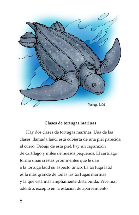 Book Preview For Sea Turtles Page 6