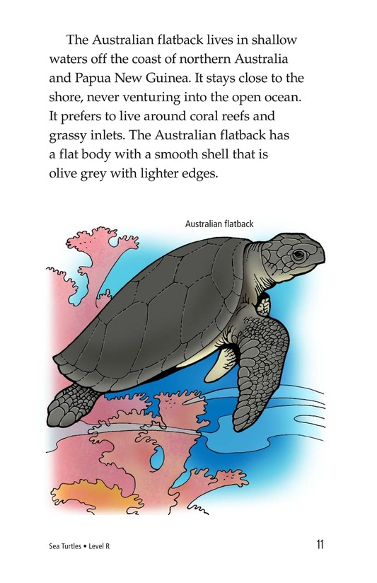 Book Preview For Sea Turtles Page 11